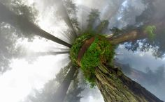 California Redwoods 360° Panorama - Little Planet Projection