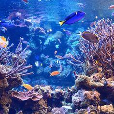 【kantakuuun__pic】さんのInstagramをピンしています。 《aquarium . . . #d610 #aquarium #アクアリウム #ドリー #ほんとの名前は知らない #サンゴ #鳥羽水族館 #nikon #三重 #instagood #igersJP #tokyocameraclub #shorttrip_photo #blue #青 #date #旅 #trip #旅行 #水槽 #l4l #bestoftheday #水 #water》