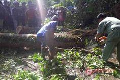 Pohon Tumbang, Selat-Rendang Macet Dua Jam - http://denpost.imediamu.com/2015/02/03/pohon-tumbang-selat-rendang-macet-dua-jam/