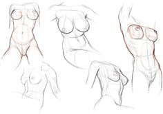 Torso2.jpg Photo:  This Photo was uploaded by shyamshriram4. Find other Torso2.jpg pictures and photos or upload your own with Photobucket free image and...