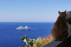 Another Corsican cat living it large !  <3