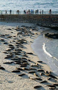 La Jolla Seal Cove California