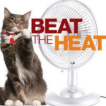 "PetSmart Charities® Awards Spay/Neuter Grants for 2013 ""Beat the Heat"" Campaign!  In collaboration with PetSmart Charities, spay/neuter clinics in 31 states are offering a $20 rate to get a female cat spayed in February 2013.  The campaign is part of PetSmart Charities® spay/neuter blitz grant program aimed at saving the lives of pets that have the highest risk of being euthanized due to overcrowding in shelters: cats, puppies and kittens, and pit bull terriers.  PLZ SHARE!"