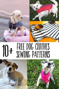 Great list of free printable dog clothes patterns to sew! So many options for how to sew dog clothes with free tutorials for all sizes. Source by kreativfieber patterns Easy Sewing Projects, Sewing Projects For Beginners, Sewing Hacks, Sewing Tutorials, Free Tutorials, Sewing Tips, Sewing Ideas, Dog Clothes Patterns, Sewing Patterns Free
