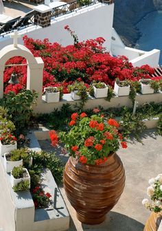 Rooftop garden in Oia, Santorini, Greece • from: Understanding Exposure, 3rd Edition: How to Shoot Great Photographs with Any Camera by Bryan Peterson