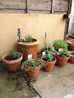 New herbs for the garden Balcony, Planter Pots, Herbs, Fruit, Garden, Garten, Lawn And Garden, Balconies, Herb