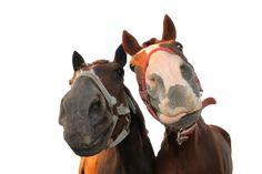 Mishka and Toffee at Salt Lake Stables Kos, Greece http://horsesnsheep.wix.com/saltlakestableskos#!about/c1x9v