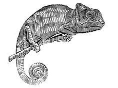 #linocut #kameleon #blackandwhite #contemporaryart #contemporary #artwork #graphic #linoprint #print #art #animals Linoprint, Contemporary Artwork, Animals, Camel, Animales, Animaux, Contemporary Art, Animal, Animais