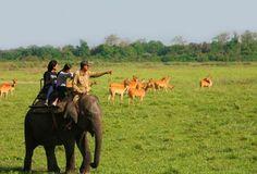 Kaziranga Nemzeti Park