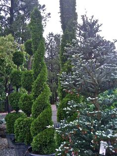 "Topiary: derived from the Latin word for an ornamental landscape gardener, ""topiaries,"" a creator of topia or ""places."""