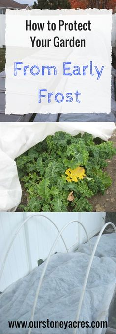 Protecting your garden from Early Frost can extend your growing season by several weeks.  This post will teach you my trick for defeating those first few early season frosts!