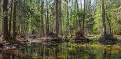 Puszcza Białowieska Natural Ecosystem, Innsbruck, Paul Gauguin, Bilbao, Tahiti, Brunei, Spring Time, Woodland, Scenery