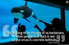 So sad.... Boycott seaworld! Free the orcas!