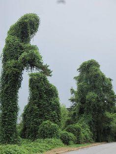 Spartanburg - kudzu man by CharNewcomb, via Flickr