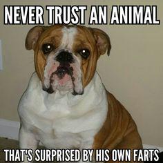 Truth! Bulldog rules. #mydog #mybestfriend #thankyoujesus