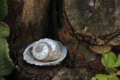 Seashell on Display by Charissa Lotter (de Scande) by Charissa Lotter (de Scande) on 500px