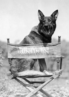 Rin Tin Tin, (1918-1932), male German Shepherd rescued from WWI battlefield by an American soldier.  After his death his descendants carried on the starring roles he played in films.