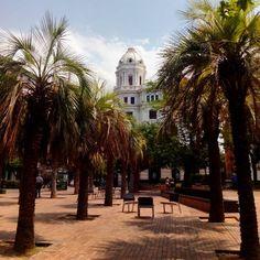 Buenos días desde la Plaza del Portillo, cuyas exuberantes palmeras son un buen refugio para estos días de intenso calor