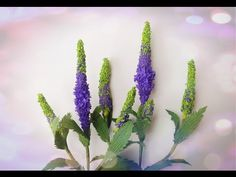 How to make ginger paper flower diy ginger crepe paper flower how to make veronica flower from crepe paper craft tutorial youtube mightylinksfo
