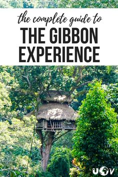 The complete guide to The Gibbon Experience in Laos. What it's like to live in tree houses and ride some of the longest zip lines in the world!
