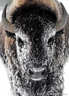 Красота и гармония дикой природы в фотографиях бывшего математика « FotoRelax