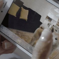 Furbo - A treat-tossing robot for your dog. (Android, iPhone, and Video Streaming) Read the opinion of 10 influencers. Discover 3 alternatives like Petnet an...