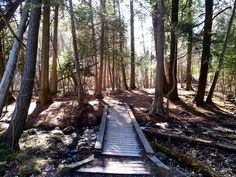 """trees identified in Peterborough's Jackson Park"""" by kawarthaNOW // Jackson Creek Old-Growth Forest is one of eight urban old-growth forests in Ontario. Peterborough Ontario, Old Trees, Film Inspiration, New Community, Pine Forest, Jackson, Environment, Canada, Island"""