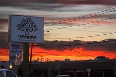 Sunset over weGrow Phoenix