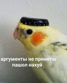 Cat Memes, Dankest Memes, Funny Memes, Hello Memes, Happy Memes, Russian Memes, Cute Love Memes, Funny Birds, Quality Memes