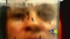 Local health officials worried as Zika virus cases rise in California