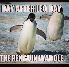 144 Best Gym Humor Images Workout Humor Gym Humor Fitness Humor