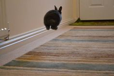 Binkyyyyyyyyyyy!! levitation #bunny :)