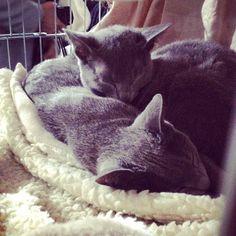 Gatti: Mamma gatta e gattino #cats