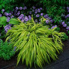 JAPANESE FOREST GRASS AND CO