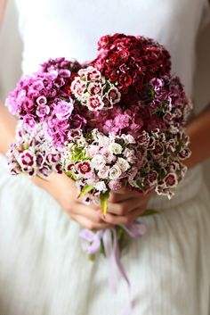A gorgeous Sweet William bouquet. They are lovely colours and they are perfect for a summer wedding, when they are in season.