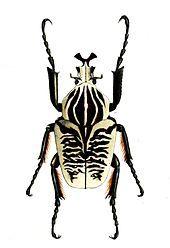 Items similar to Insects Bugs Entomology 16 Vintage Illustration Wall Decor Print 8 x 10 on Etsy Goliath Beetle, Reptile Habitat, Cool Bugs, Science Illustration, Black Ink Tattoos, Bugs And Insects, Reptiles And Amphibians, Shades Of Black, Amazing Nature