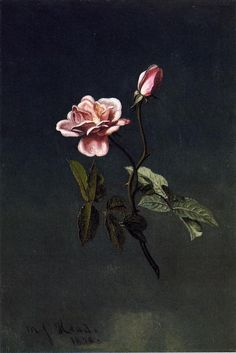 Pink Rose Martin Johnson Heade 1878 Private collection Painting - oil on canvas Height: 39.37 cm (15.5 in.), Width: 27.62 cm (10.88 in.)
