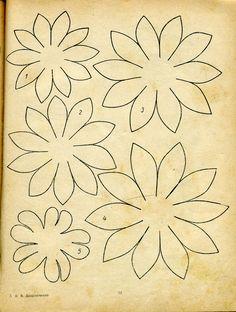 daisy type