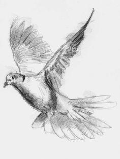 Artist Sean Briggs producing a sketch a day Dove #art #dove #drawing #http://etsy.me/1rARc0J #sketch