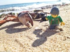 Man of action: Of course working so close to nature has its unintended consequences, including the occasional crab-attack.