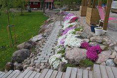Kuvahaun tulos haulle kiviaidan kasvit