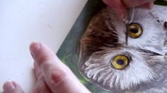 Scratchboard Demo: Northern Saw-whet Owl