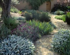 Potager Garden Using Plants for Texture in Garden Design - Leaf texture plays a big role in garden design from fine, coarse, bold, or in between, see how the interest comes in how you mix things up. Landscaping Inspiration, Plants, Contemporary Garden, Cottage Garden, Urban Garden, Backyard Garden Design, Garden Planning, Mediterranean Garden, Dry Garden