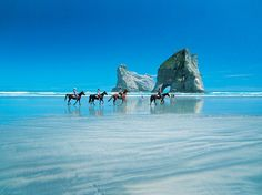 PAKIRI ON HORSEBACK - Pakiri-Beach - Horseback riding on any beach is a special event but horseback riding on Pakiri Beach (just minutes Matakana) provides a breathtaking view of New Zealand landscape that is an an unforgettable experience. More about Matakana are beaches at http://www.matakanacountry.co.nz/markets-lodging-accommodations-auckland-coast-wine-country-hotels/