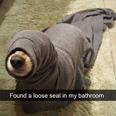 Found a loose seal in my bathroom