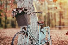 Lackfi János: Ő kómában feküdt, mi pedig imádkoztunkLackfi János: Ő kómában feküdt, mi pedig imádkoztunk| Képmás Magazin Spring Photos, Photo Blue, Antique Photos, Photo Illustration, Royalty Free Images, Stock Photos, Outdoor Decor, Floral, Bicycles