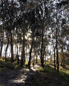 Una vista diferente de lo que te puedes encontrar en las #IslasCíes vía @montsecapdevila_ #Galicia #SienteGalicia #RíasBaixas ➡ Descubre más en http://www.sientegalicia.com/