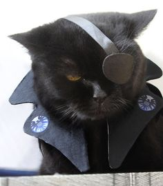 nudityandnerdery: migraine-sky: my cat cosplays Nick Fury Aw, adorable Nick Furry. Cute Cats, Funny Cats, Funny Animals, Cute Animals, Happy Animals, Animal Costumes, Pet Costumes, Kitten Costumes, Cosplay Costumes