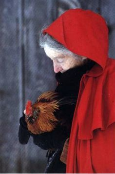 "Spitzenhaben rooster: ""I love chickens.  They are an old 16th-century breed from Germany. They have very chic bonnets.  They are very tame.""                                            ---Tasha Tudor"