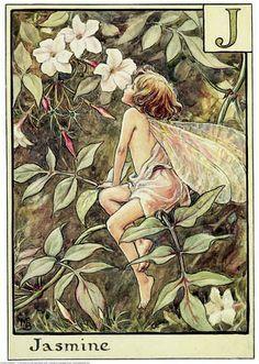GEMINIS, Tu perfume Alquímico es el de Jazmín Vintage Fairies, Fairy Art, Magical Creatures, Fairy Houses, Jasmine, Jasmin Flower, Cicely Mary Barker, Pixies, Gnomes